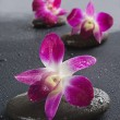 Zen stones with orchid flowers — Stock Photo