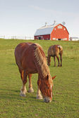 Horses and a barn vertical — Stockfoto