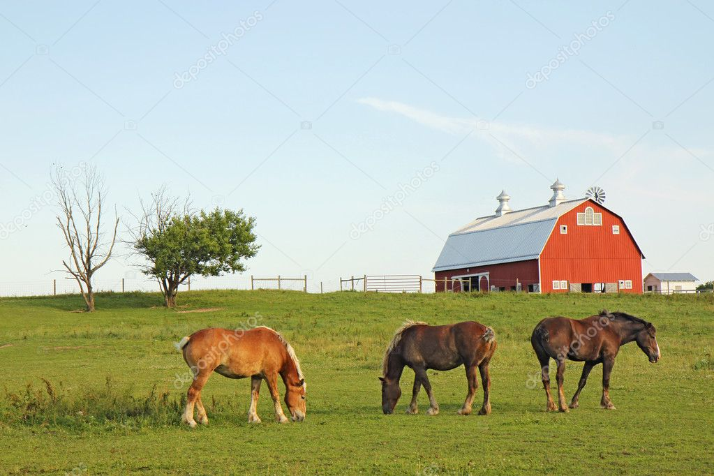 Three Belgian draft horses graze on a farm at Prophetstown State Park, Tippecanoe County, Indiana, with green grass and blue sky — Stock Photo #6932721