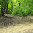 Path in a green forest — Stock Photo
