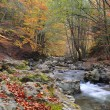 Autumn river — Stock Photo #6814817