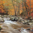 Autumn river — Stock Photo #6824764