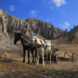 Horses and mountains — Stockfoto