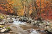 Hösten river — Stockfoto
