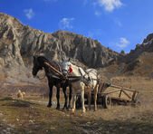 Horses and mountains — Stock Photo