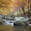 Autumn river — Stock Photo #6854217