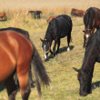 Herd of horse — Stock Photo