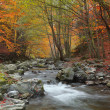 Autumn river — Stock Photo #6884969