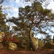 The forest of Fontainebleau - Stock Photo