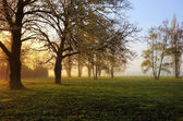 Spring sunrise — Stockfoto