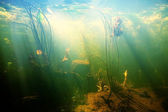 Beautiful Underwater view of a pond — Stock Photo