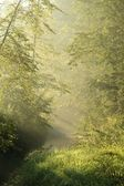 Forest stream at sunrise — Stock Photo