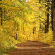 Autumn forest at dusk — Stock Photo