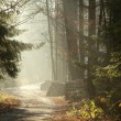 Misty coniferous forest - Stock Photo