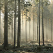 Stock Photo: Misty autumn forest at dawn