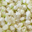 Stock Photo: Fresh Jasmine Flower Background