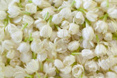 Fresh Jasmine Flower Background — Stock Photo