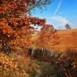 Autumn countryside — Stock Photo #7583194