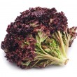 Stock Photo: Red lettuce