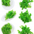 Collage  of Fresh parsley on white.Isolated - 图库照片