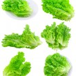 Collage Leaf of lettuce on white . Isolated — Stock Photo #6911722