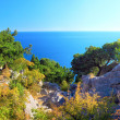 Crimea  Black Sea landscape.Pine - Stock Photo
