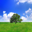 Alone one big tree on green field . Panorama — Stock Photo