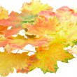 Background, wallpaper-perfect autumn leaf . — Stock Photo
