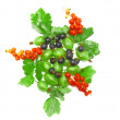 Berry mix-red , black currant, with leaf.Isolated. — Stock Photo