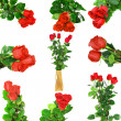 Beautiful collage of red roses .  Isolated. — Stock Photo