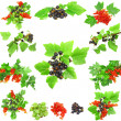 Collage of berrys on white background. Isolated — Stock Photo