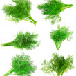 Collage Bunch of dill on white . Isolated — Stock Photo