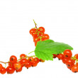 Red currant with leaf on white. Isolated. — Stock Photo