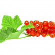 Red currant with leaf on white. Isolated. — ストック写真