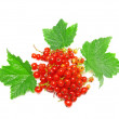 Stock Photo: Red currant with leaf on white. Isolated.