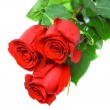 Beautiful three red roses . Isolated. — Stock Photo #6912824