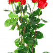 Beautiful bouquet of red roses .  Isolated. — Stock Photo