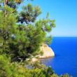 Crimelandscape. MediterranePine — Stock Photo #6912997