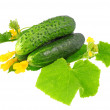 Fresh  cucumbers with yellow blossom cluster. — Stock Photo