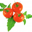 Lush tomatos with green leafs. Isolated — Stock Photo #6913374