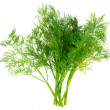 Bunch of dill on white background. Isolated - Foto de Stock