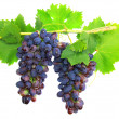 Stock Photo: Black grape on cane vine with leafe. Isolated