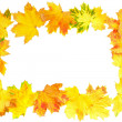 Frame of Autumn Leaf over white. — Stock Photo