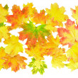 Stock Photo: Background, wallpaper-perfect autumn leaf .