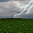Stock Photo: Lightning across the countryside field.