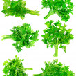 Collage of Fresh parsley on white. Isolated — Stock Photo
