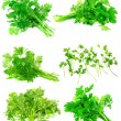 Collage of Fresh parsley on white. Isolated — Stock Photo #6914265