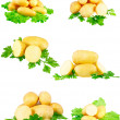 Collection of young potatoes, parsley . Isolated — Stock Photo