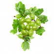 Ripe gooseberry on branch. Isolated. — Stock Photo