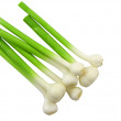 Young garlic on white background. Isolated - Stock Photo